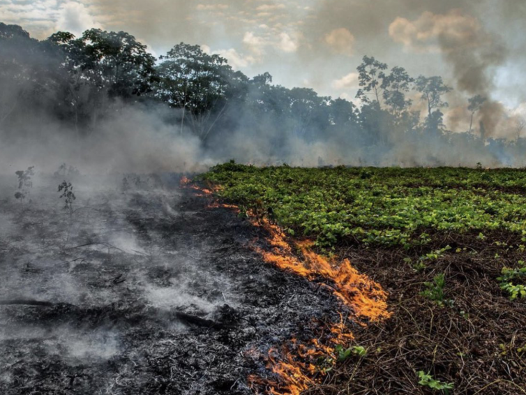 """""""Will the Amazon Fires Wake Up the World?"""" – An Interview with the Rainforest Alliance's Nigel Sizer"""